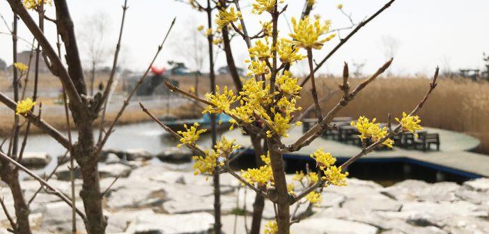유리섬 봄꽃